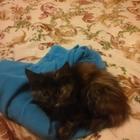 Котенок с приданым