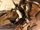 Изображение в   15 июля в 21:00 потерялся кот по адресу ул. в Соликамске 0