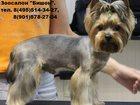 Скачать бесплатно фотографию Стрижка собак Акция! Стрижка йоркширского терьера в зоосалоне Бишон, 32599306 в Москве