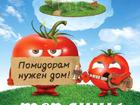 Скачать бесплатно foto Строительные материалы Теплицы для томатов Лихославль 38547605 в Лихославле