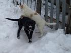 Скачать бесплатно foto Продажа собак, щенков Щенки в хорошие руки 34494171 в Старом Осколе