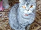 Смотреть изображение Отдам даром - приму в дар Отдам животное в хорошие руки 69686915 в Старом Осколе