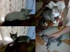 Фото в Отдам даром - Приму в дар Отдам даром Отдам в добрые руки 2-месячных котят от домашних в Ставрополе 0