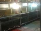Смотреть фотографию  Комплекс для разведения аквариумных рыб 39879293 в Невинномысске