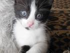 Просмотреть фото Отдам даром - приму в дар Отдам в хорошие руки котенка девочку 66476991 в Ставрополе