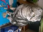 Новое foto Разные услуги Кот для вязки 39071615 в Стерлитамаке