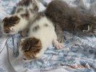Фото в   Отдам котят (два мальчика и одна девочка) в Сухом Логе 0