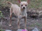 Новое foto Потерянные пропала собака 33255131 в Таганроге