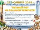Фото в Кошки и котята Выставки кошек 22 ноября 2015г - приглашаем всех принять в Таганроге 0