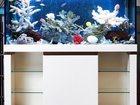 Фото в Рыбки (Аквариумистика) Купить аквариум Продаём аквариумы и комплекты под ключ, в Тюмени 50