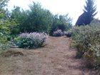 Фото в Загородная недвижимость Продажа дач Продаю дачу 9 соток в собственности недалеко в Тюмени 396000