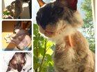Фото в Кошки и котята Вязка Ище кота для вязки, г. Тюмень. Ул. Геологоразведчиков. в Тюмени 0