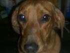 Изображение в Собаки и щенки Вязка собак Красавец, умница, добрячок. Ищет самку для в Тюмени 0