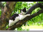 Изображение в Кошки и котята Продажа кошек и котят Консуэло - это кошка с большой буквы. Яркая в Тюмени 300