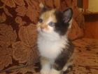 Уникальное foto Отдам даром - приму в дар Очаровательный котенок, в хорошие руки 37357136 в Тюмени