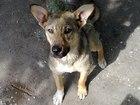 Смотреть foto Продажа собак, щенков Собачка 39552862 в Тюмени