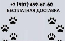 Корма для кошек и собак с бесплатной доставкой