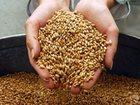 Скачать бесплатно фото  Продам пшеницу и овес фуражный, фасованный в мешки 32452175 в Томске