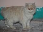 Скачать бесплатно фотографию Найденные Найден кот 38773118 в Томске