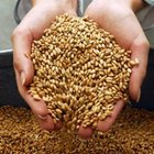 Продам пшеницу и овес фуражный, фасованный в мешки