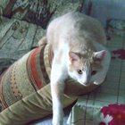 Пропал большой рыжий кот