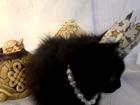 Изображение в Кошки и котята Продажа кошек и котят Прекрасная принцесса ищет добрых волшебников в Туле 0