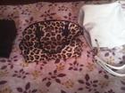 Уникальное фото  Продам женскую сумку 38520252 в Туле