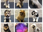 Просмотреть фото Услуги для животных Стрижка (груминг) собак и кошек 40666574 в Туле