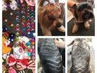 Скачать бесплатно изображение Услуги для животных Стрижка (груминг) собак и кошек 40666574 в Туле