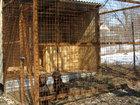 Смотреть изображение  загородная передержка для собак 69351234 в Туле