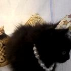 котеночек в дар