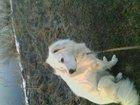 Просмотреть фотографию  отдам в дар Умного охранника и пастуха 67731508 в Твери