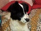 Скачать фото Продажа собак, щенков Отдам собаку в добрые руки 34744783 в Уфе