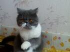 Фото в Кошки и котята Продажа кошек и котят Кот на фото был продан Галикеевой Лиане в в Уфе 0