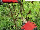 Foto в Услуги компаний и частных лиц Разные услуги Любой сад нуждается в уходе и подготовке в Уфе 0