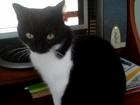 Новое изображение  Пропала домашняя кошка Фрося! 69352413 в Уфе
