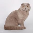 Вязка с вислоухим котиков