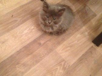Скачать фото Отдам даром Отдам котенка 37541169 в Уфе