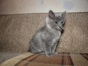 Свежее фото Отдам даром Отдам котенка 37579350 в Уфе