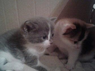 Уникальное изображение Отдам даром - приму в дар отдам в дар котят 37764811 в Уфе