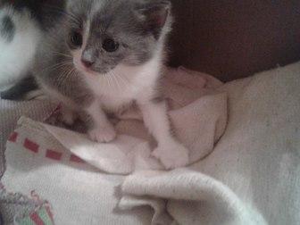 Скачать фото Отдам даром - приму в дар отдам в дар котят 37764811 в Уфе