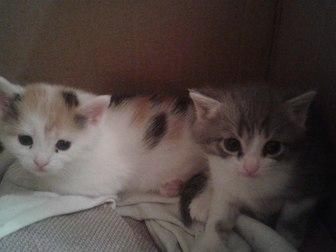 Увидеть foto Отдам даром - приму в дар отдам в дар котят 37764811 в Уфе