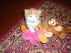 Уникальное foto  Отдам котенка в добрые руки 32472934 в Ухте