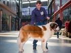 Изображение в Собаки и щенки Продажа собак, щенков Для вязок предлагается молодой и перспективный в Самаре 0