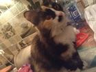 Фотография в   Отдам стерилизованную кошку! Приучена к латку, в Уссурийске 0