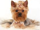 Уникальное фото Стрижка собак Стрижка собак Видное, Выезд мастера на дом, Стрижка собак, 60466583 в Видном