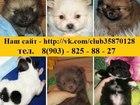 Фото в Собаки и щенки Продажа собак, щенков Продам по минимальным ценам чистокровных в Владимире 11000