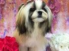 Смотреть изображение Стрижка собак Стрижка и триминг собак в салоне Лайкин 37517388 в Владимире