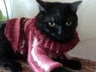 Свежее foto Вязка Кошечка неразвязанная ищет кота-британца в пределах своего города 39421909 в Радужном