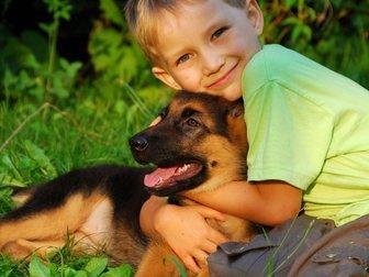 Свежее фотографию Разное Укрепление детского иммунитета 33979340 в Владимире